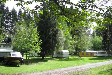Leafy grounds for camping Manapouri  Motels andMotor Park